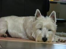 When is it best to let sleeping dogs lie?