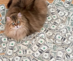 Don't let greed turn you into a fat cat.